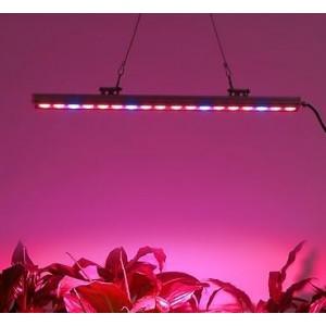 Taimelamp, LED 81W